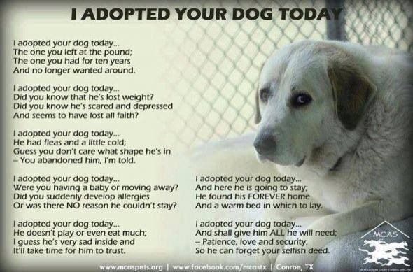 I Adopted Your Dog Today Rescue Quotes Dog Quotes Dogs