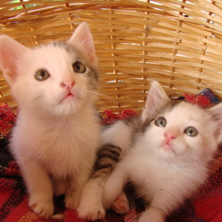 Help Us To Save These Kittens From Being Eaten Please Don T