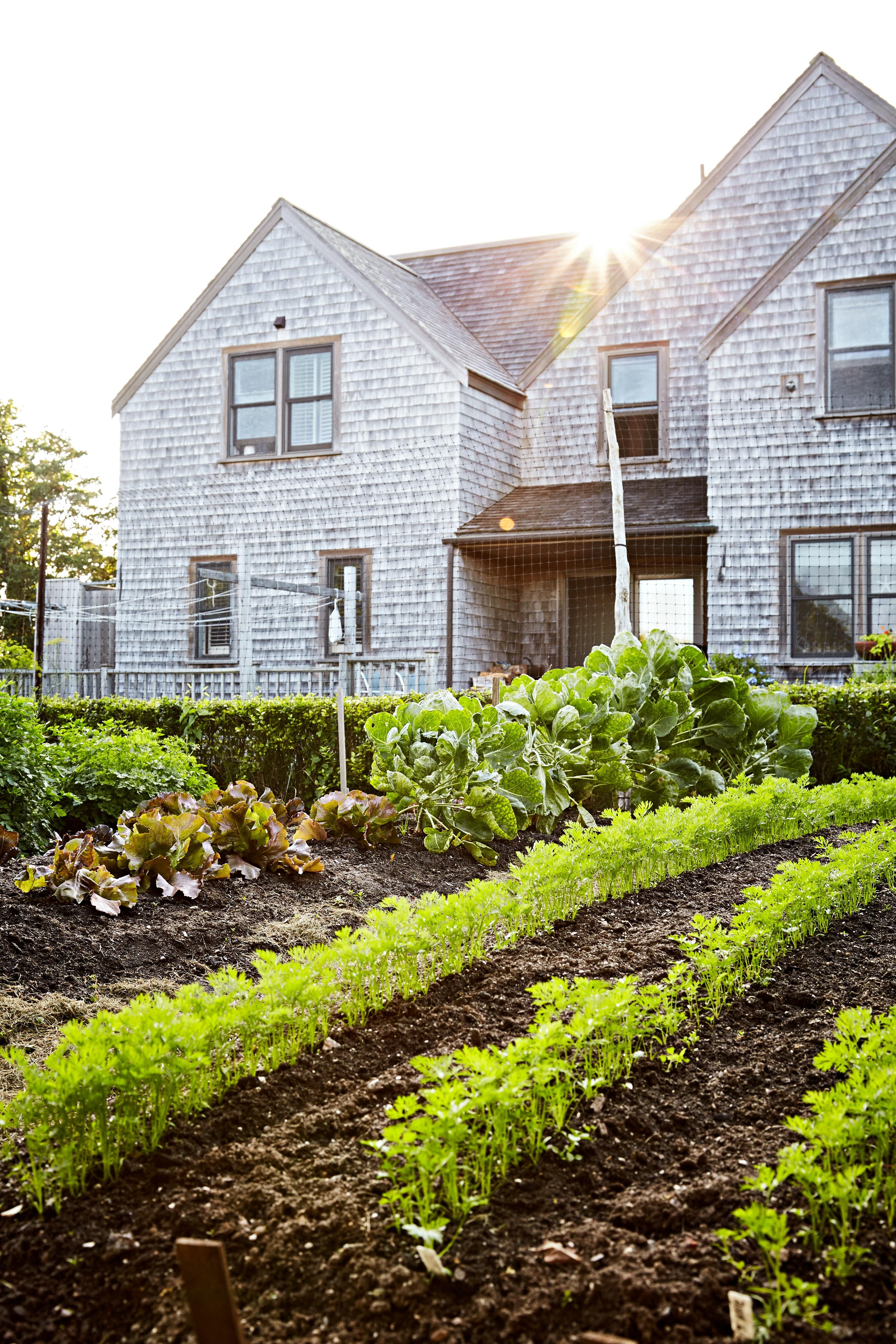 Ultimate Step-by-Step Guide to Vegetable Gardening Planting tomatoes, carrots, or cukes for the first time? If you're a novice, you're in luck. We have all the vegetable gardening tips you'll need to plan, prepare, plant, and maintain a successful garden.Planting tomatoes, carrots, or cukes for the first time? If yo...
