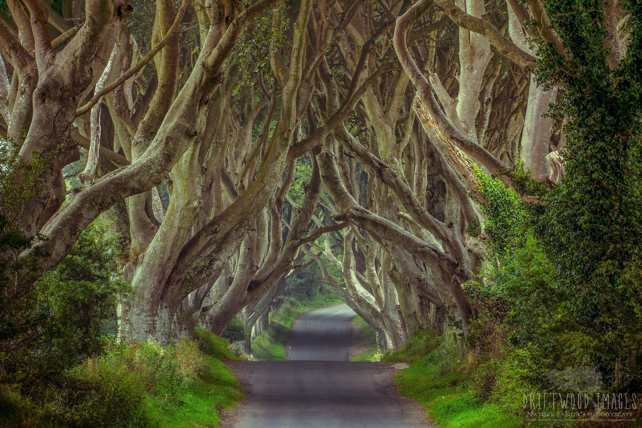 фото таинственный лес северная ирландия пользу