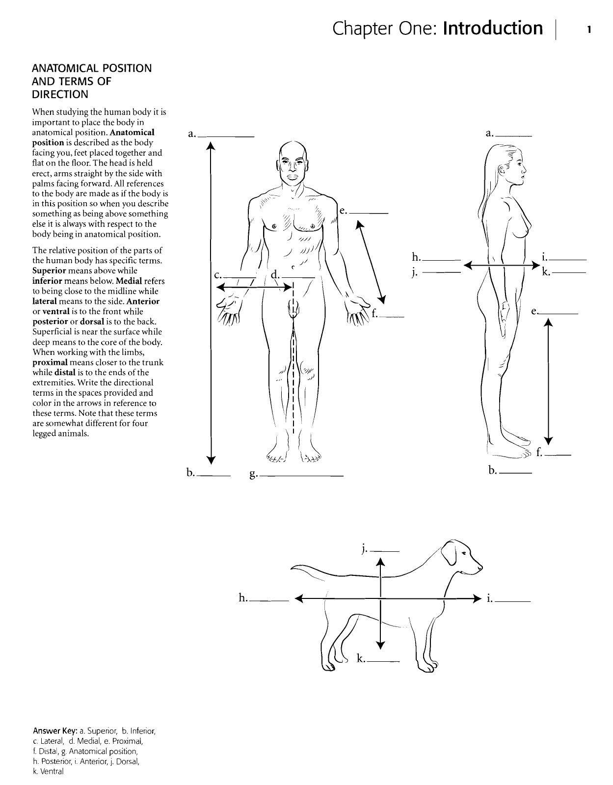 Kaplan Anatomy Coloring Book
