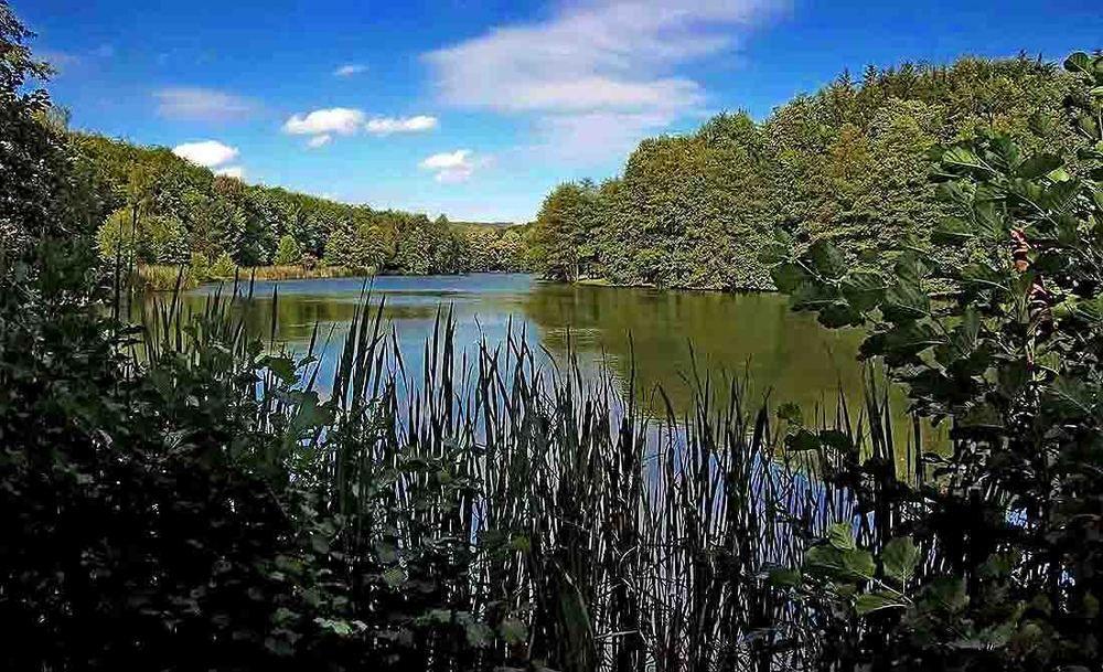 Good Naherholung mit viel Gr n ist der Deutsch Franz sische Garten in Saarbr cken Wer will kann ja mehrfach um den See spazieren Egal bei welch u