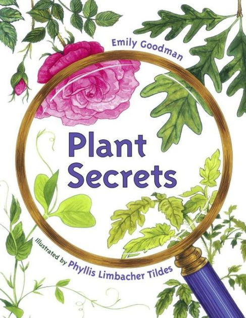 Look for the SECRET hidden inside . . .Plants come in all shapes and sizes, but they go through the same stages as they grow. Using four common plants, young...
