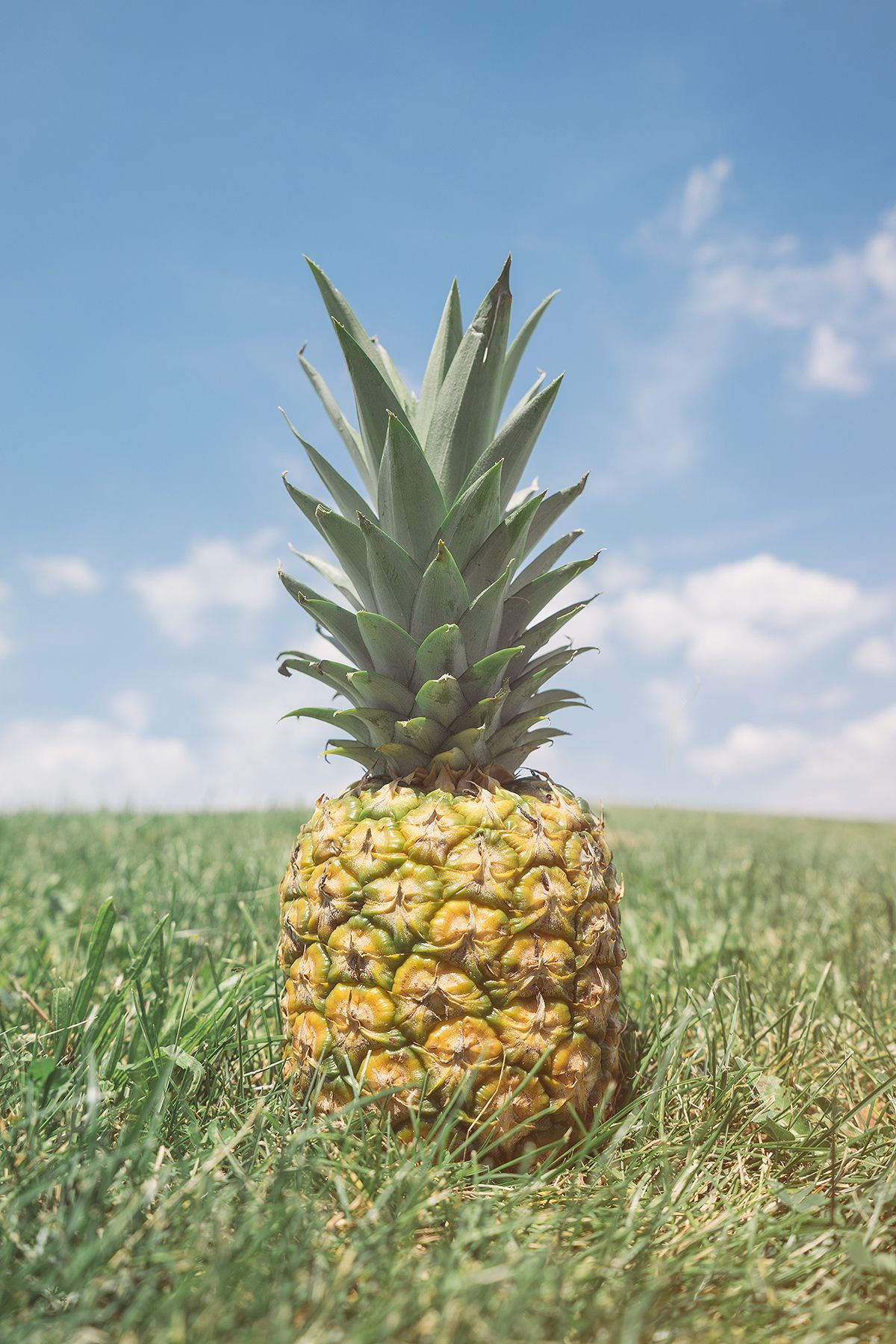 download Africa travel, Close up photography, Pineapple