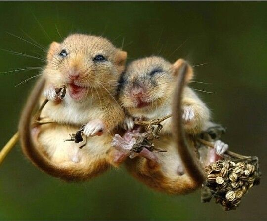 Cute hamsters