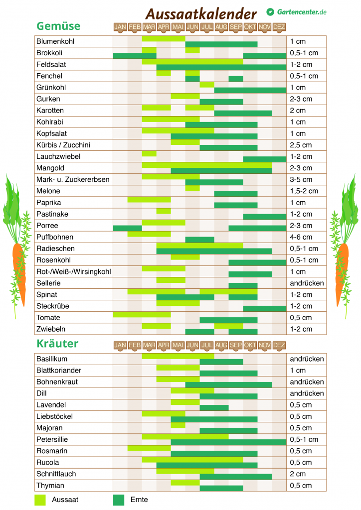 Pflanzkalender: Wann man welches Gemüse und welche Kräuter pflanzen und ernten kann