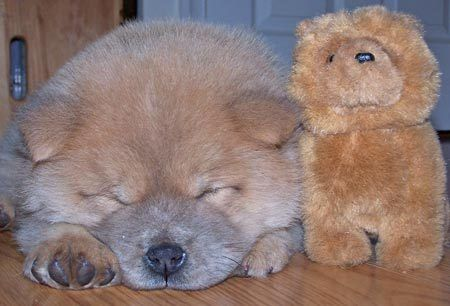 A Legend Says That The Original Teddy Bears Were Modeled After