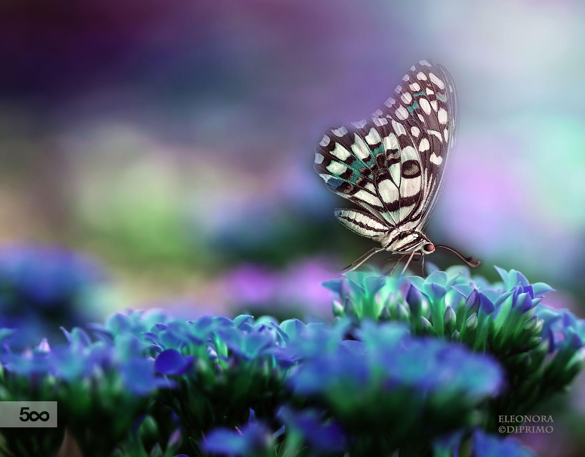 Blue Garden by Eleonora Di Primo on 500px
