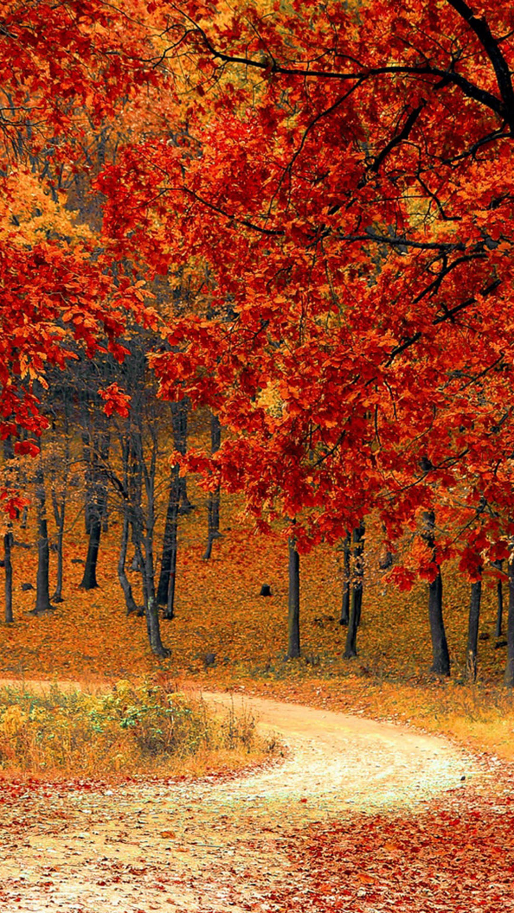 Beautiful Autumn Road Trees 4k Ultra Hd Mobile Wallpaper In 2020 Fall Facebook Cover Photos Fall Wallpaper Fall Facebook Cover