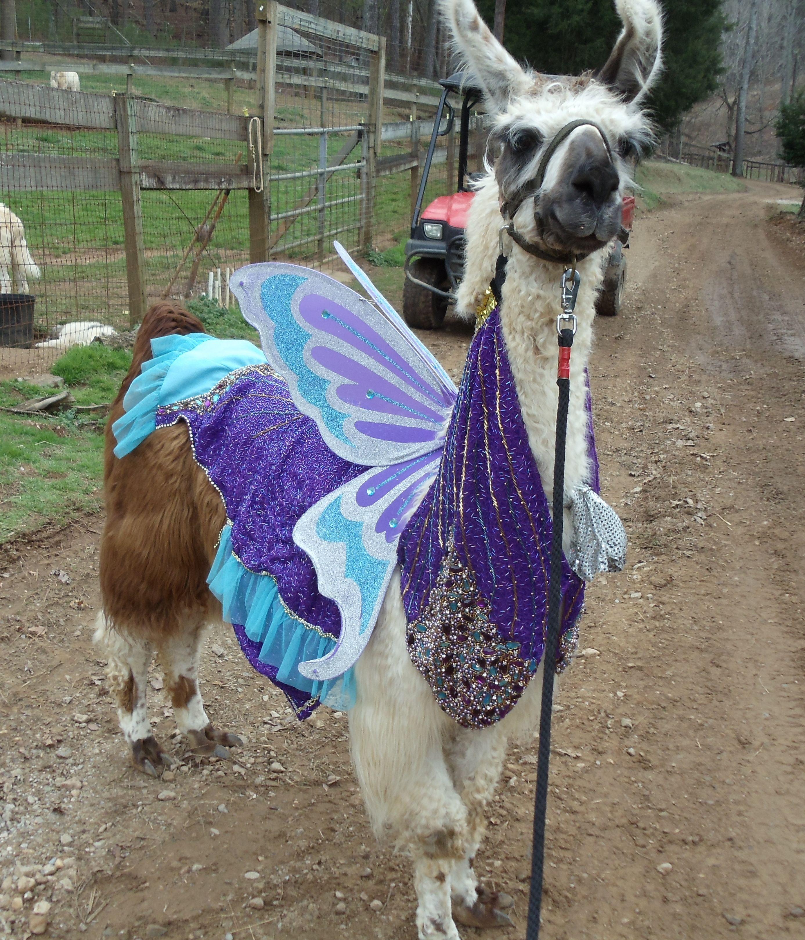 Llama Twist Purple Glass Butterfly Parade Costume