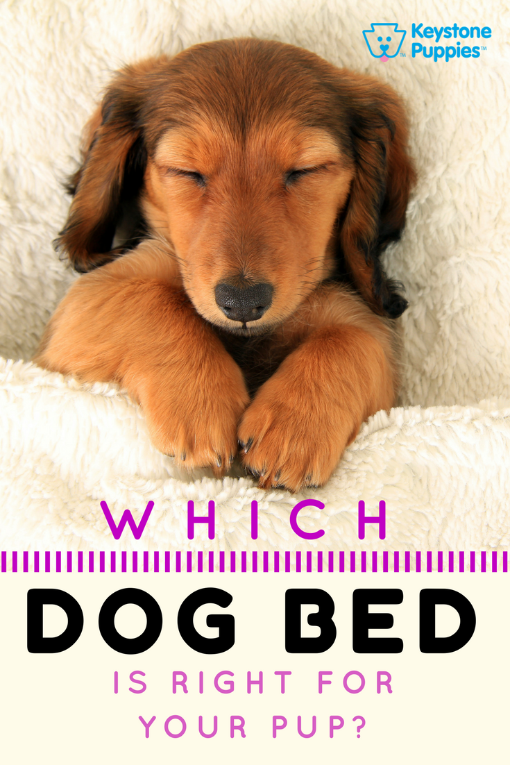 Which dog bed should you choose cute pinterest dogs puppies
