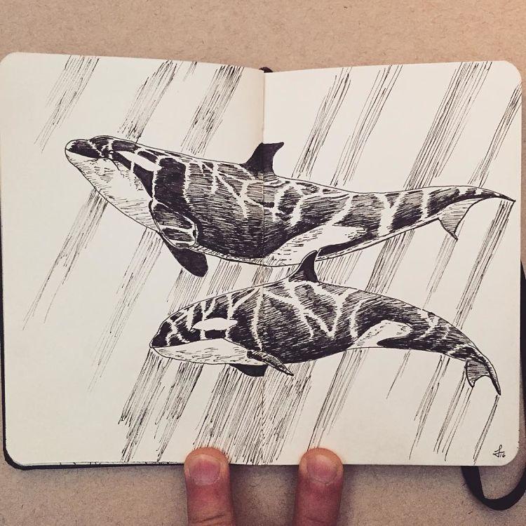Coup de coeur : Les illustrations noir et blanc de Francisco Del Carpio