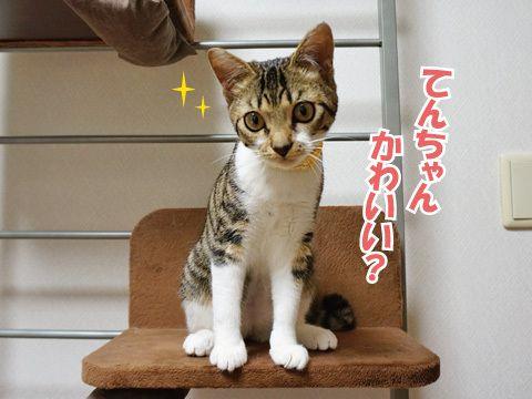 愛のカギシッポアタック! うにオフィシャルブログ「うにの秘密基地」Powered by Ameba