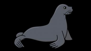 How To Draw A Sea Lion Sea Lion Drawings Sea