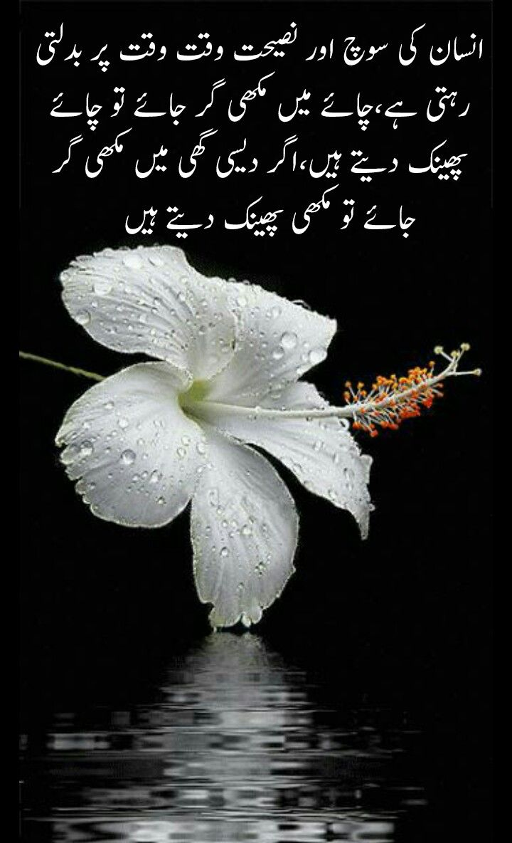 Pin By Rawi H Mughal On Urdu Quotes White Hibiscus Hibiscus Flower Wallpaper