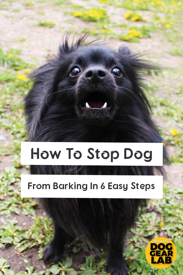 How To Stop Dog Barking In 6 Easy Steps In 2020 Stop Dog Barking Dogs Dog Barking At Night