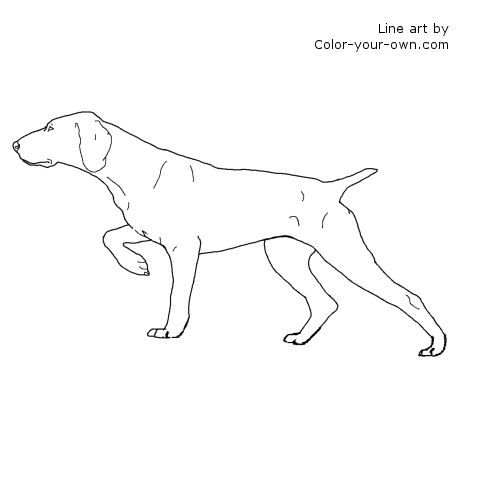 German Shorthair Pointer Dog Line Art Dog Coloring Page Dog