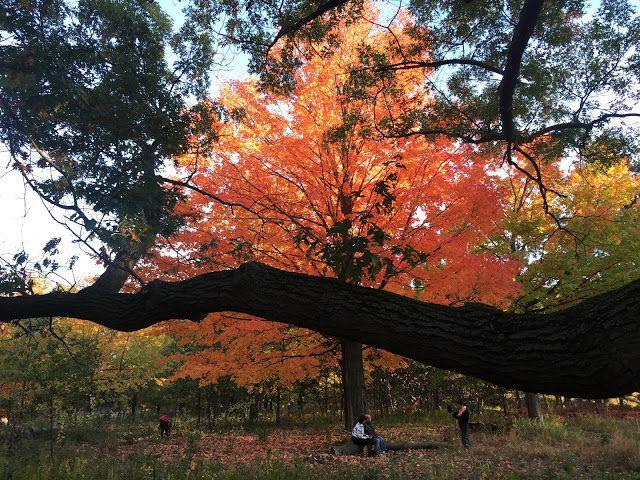Lulu´s Diary: Atardeceres en el Parque