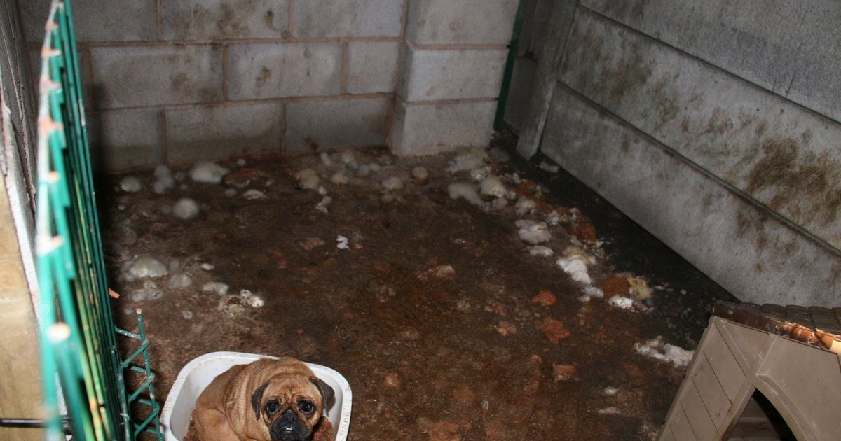 People Visit Responsible Breeder And Can T Believe What They Find Sick Puppies Buy Puppies Puppies