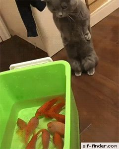 Stunned Cat -  Stephanie Hicks -  stephhicks33  - #cat #Hicks #Stephanie #stephhicks33 #Stunned
