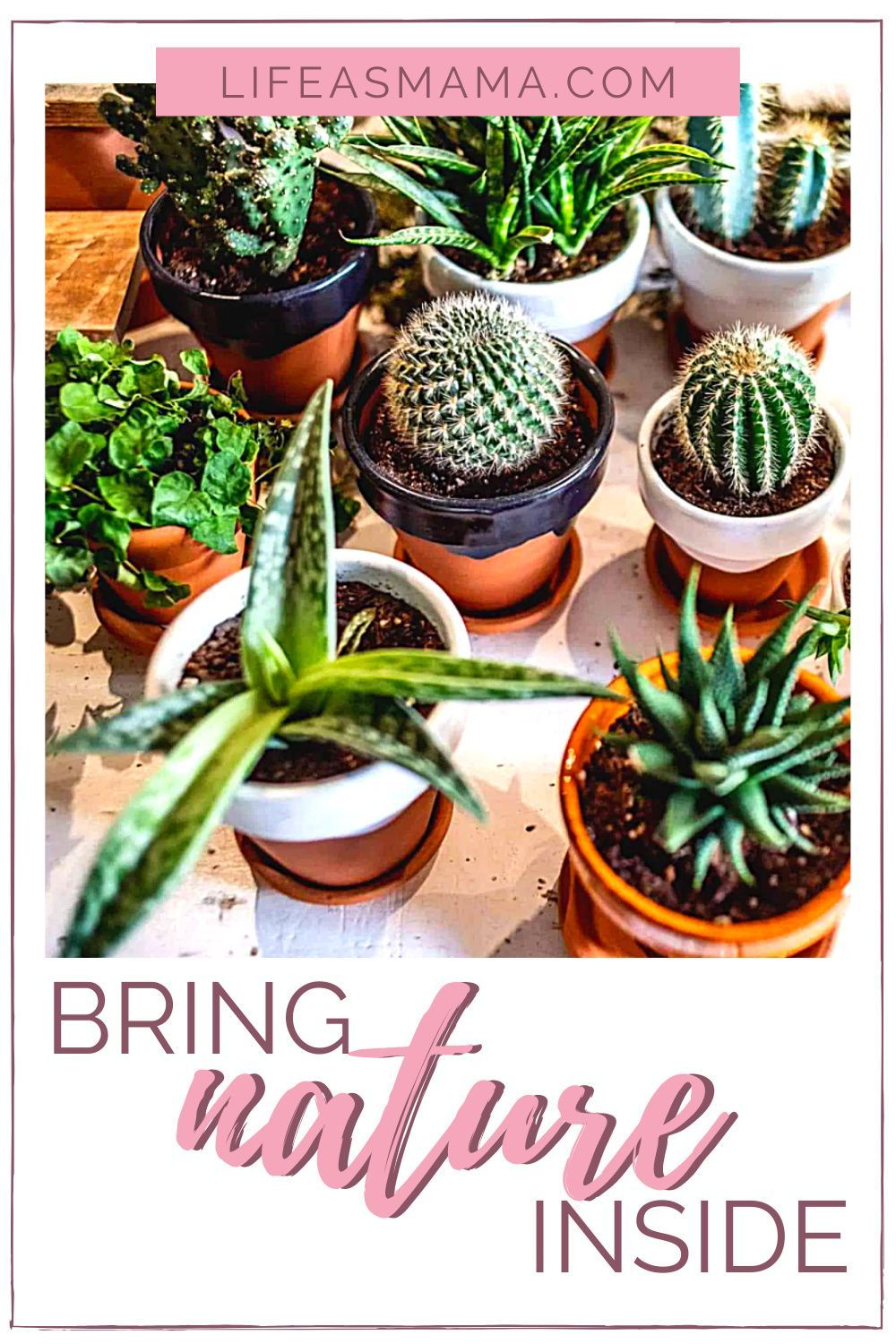 Your home is your place of peace. Bringing nature into your home helps create a sanctuary within your walls. Following some simple tips and tricks will help you bring create the home you always needed. #natureinside #houseplants #decoratewithplants #lifeasmama