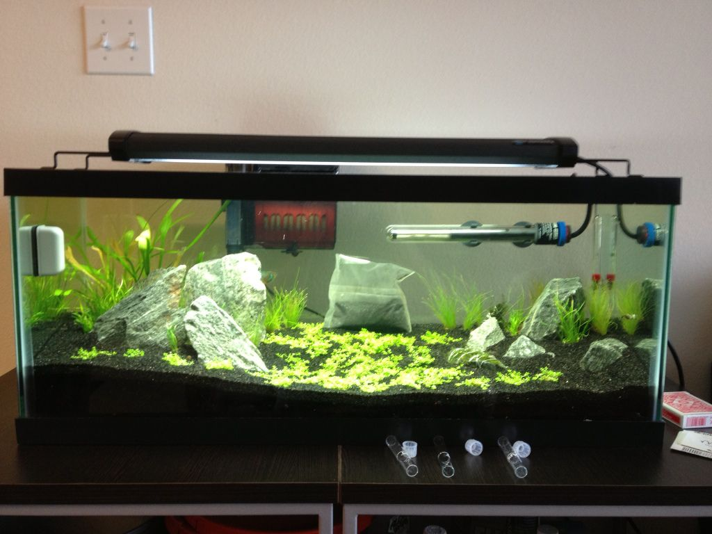 20 Gallon Long Journey - The Planted Tank Forum | Gallon ...