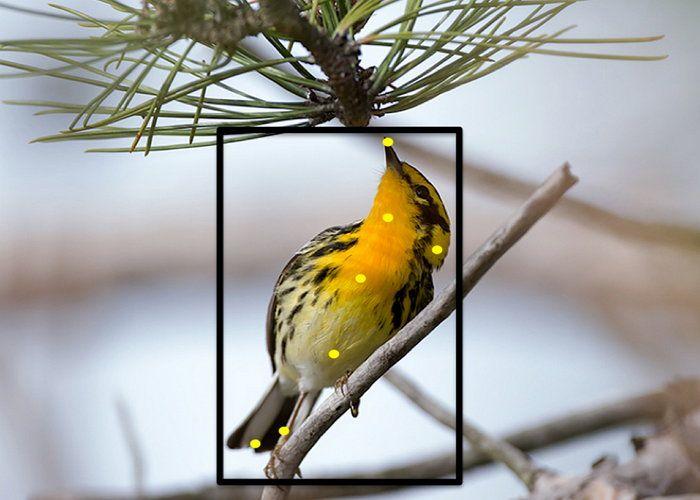 AppsUser: Merlin Bird Photo ID, aplicación para conocer que especie de pájaro es con solo una fotografía