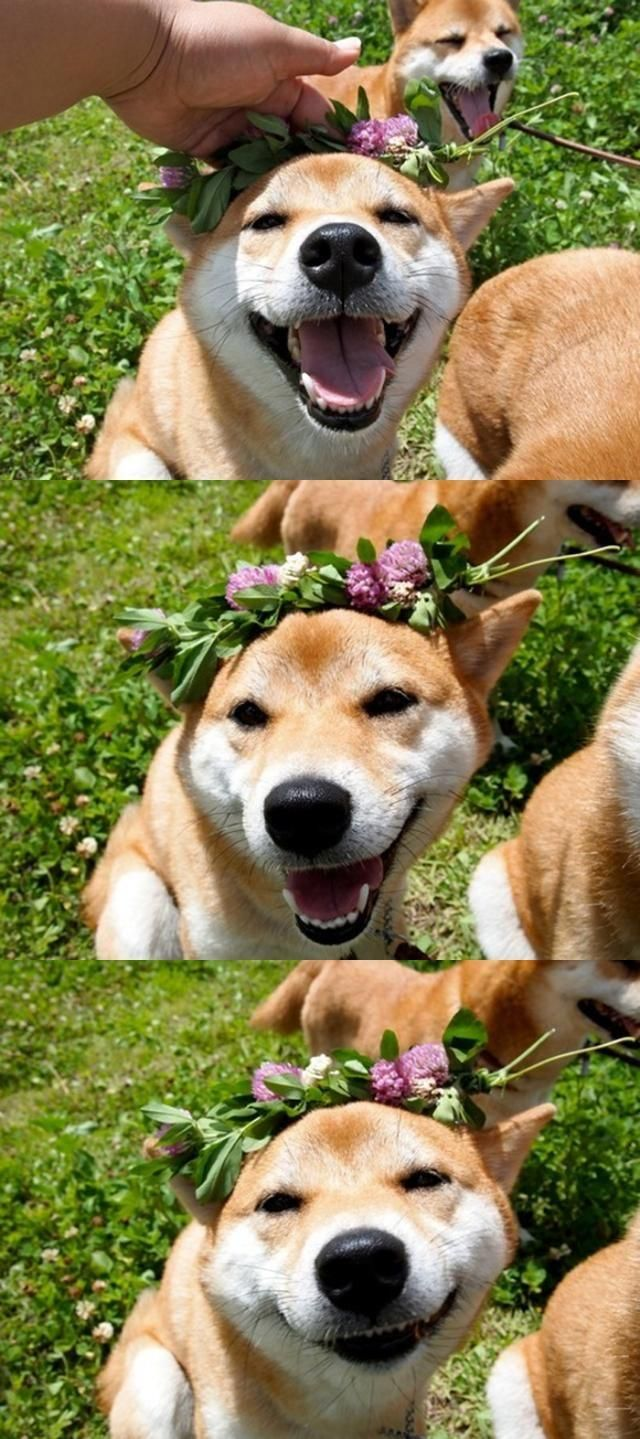 Shibe With Flower Crown Cute Animals Dog Icon Beautiful Dogs