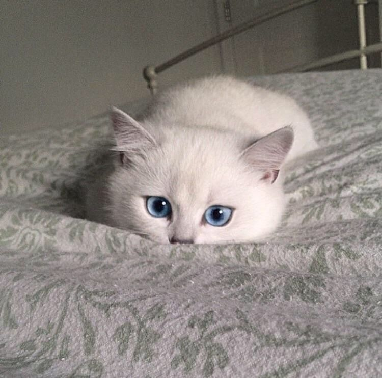 This Adorable White Cat Needs To Come Home With Me Look At Those