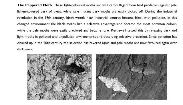 The Peppered moth. | Evolution and Natural Selection ...
