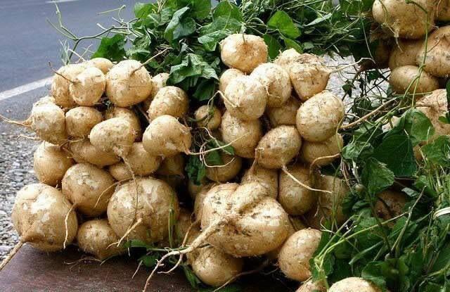 POTATO 100 Pcs Seed SEEDS Vegetable Potato Seeds Delicious Nutrition Vegetables