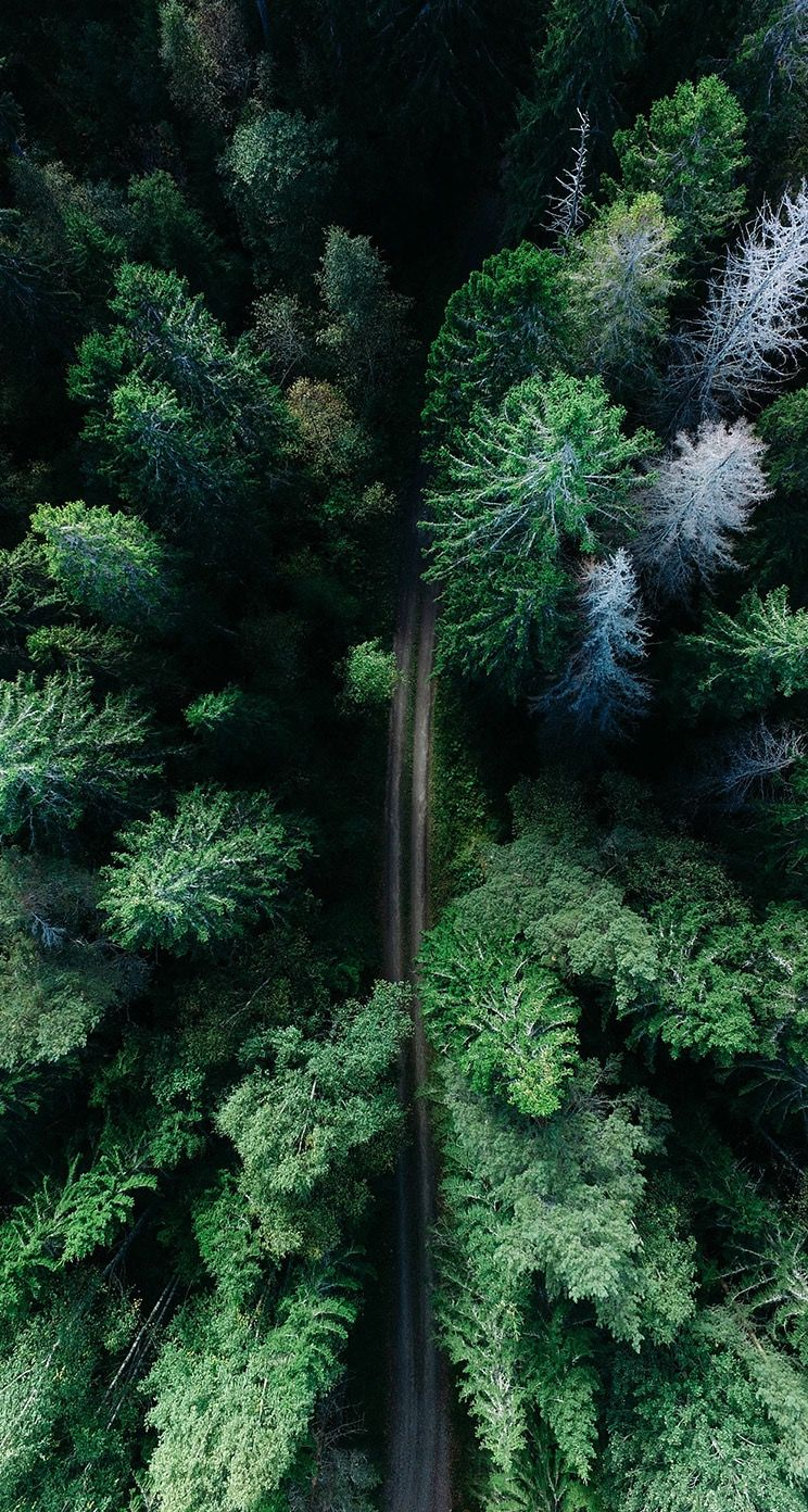 Forest From Above Too Beautiful Forest Above Background Iphone Aerial View Color Of Life Tree Photography Hd wallpaper forest trees aerial view