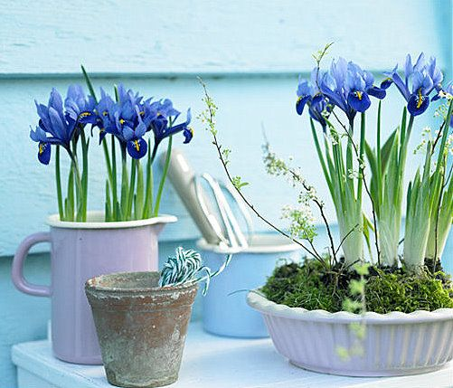 Brabourne farm love potted spring bulbs decor pinterest flowers brabourne farm love potted spring bulbs mightylinksfo