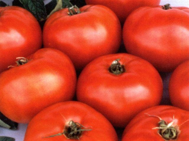 Jet Star Tomato Tomato Tomato Seeds Vegetable Seed