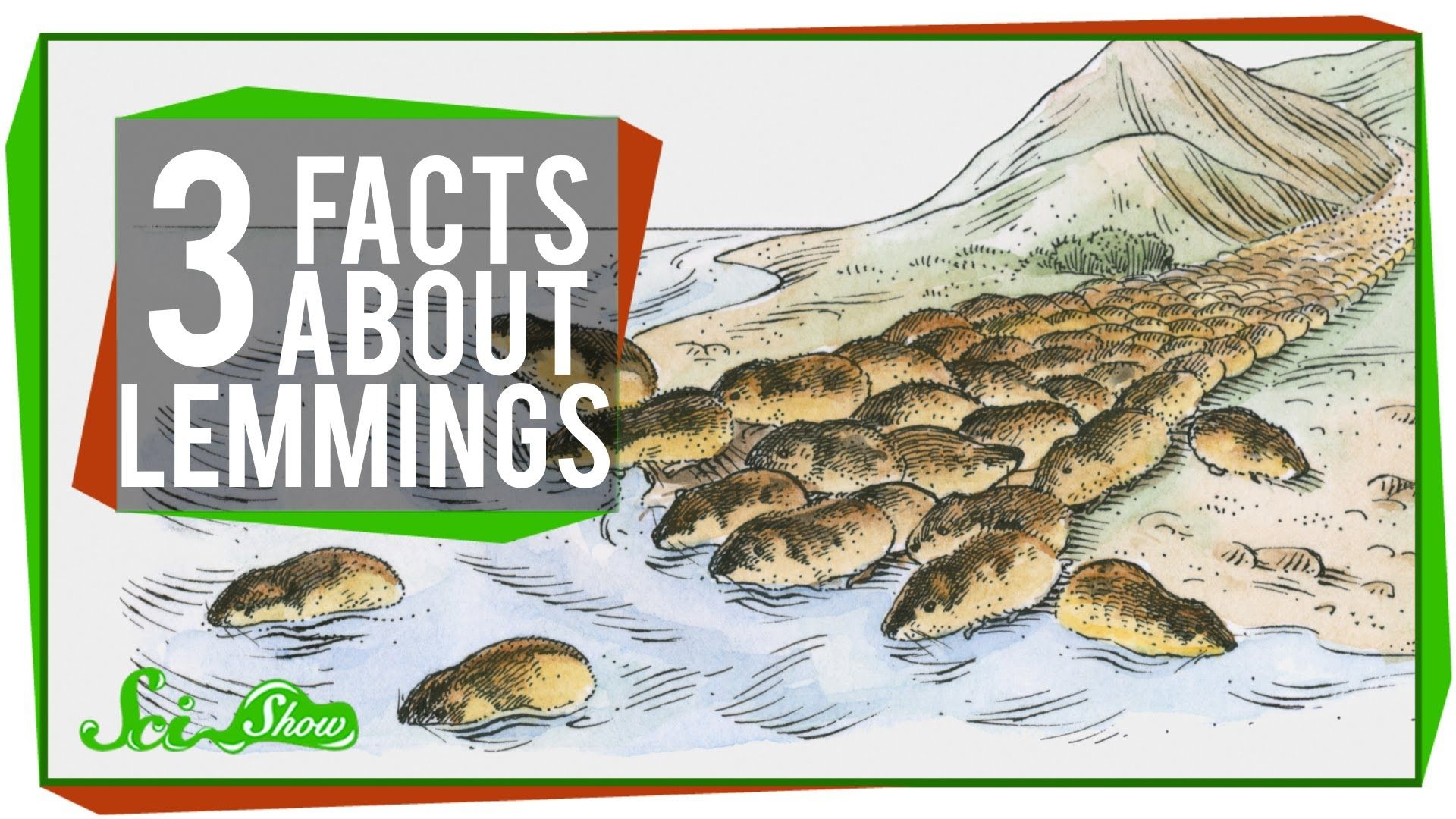 3 Facts About Lemmings Lemming, Facts, Disney documentary