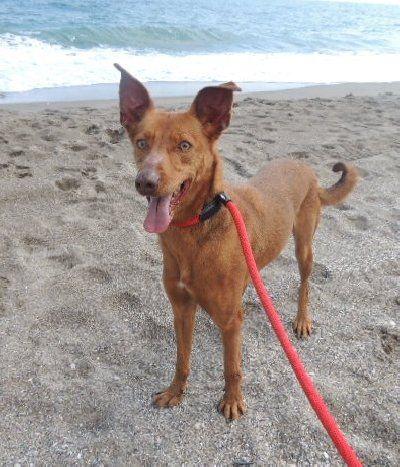 ACE Animal Care España - De refugio bezoeken