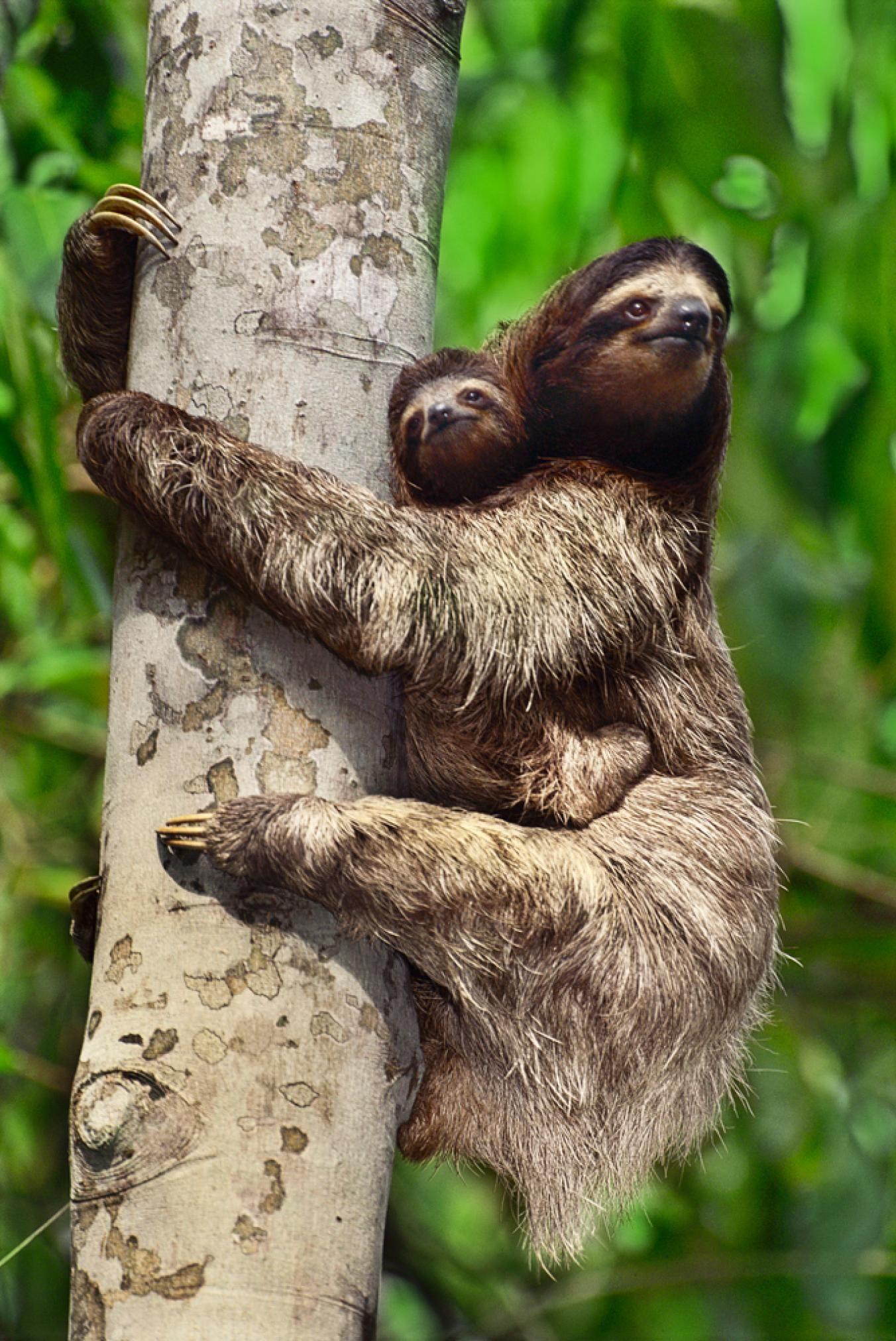 5 Strange Ways Animal Mothers Carry Their Babies