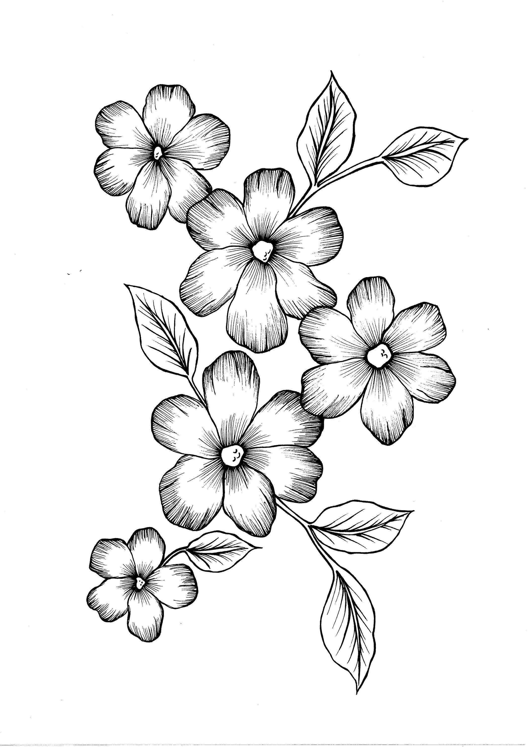 Wild Flowers Pdf Coloring Page Flower Art Drawing Flower