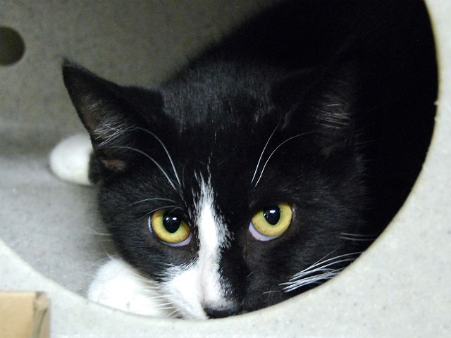 ST PAUL A1099161 (With images) Saving cat, Pet