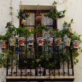 plantas para balcones y terrazas ii