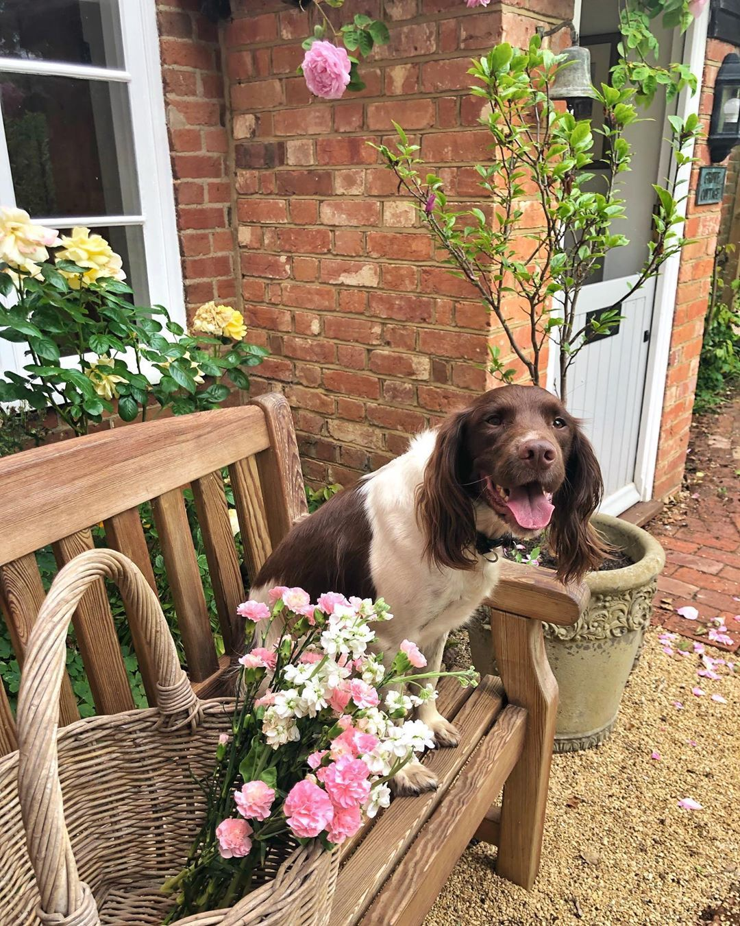 Naomi Grove Cottage On Instagram Happy Monday Did You All Have A Lovely Weekend As You Can See Radiey Enjoyed Have A Lovely Weekend Lovely Instagram