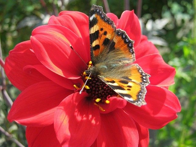 Free Jigsaw Puzzles Online - BUTTERFLY  #Game #JigsawPuzzle #Puzzle