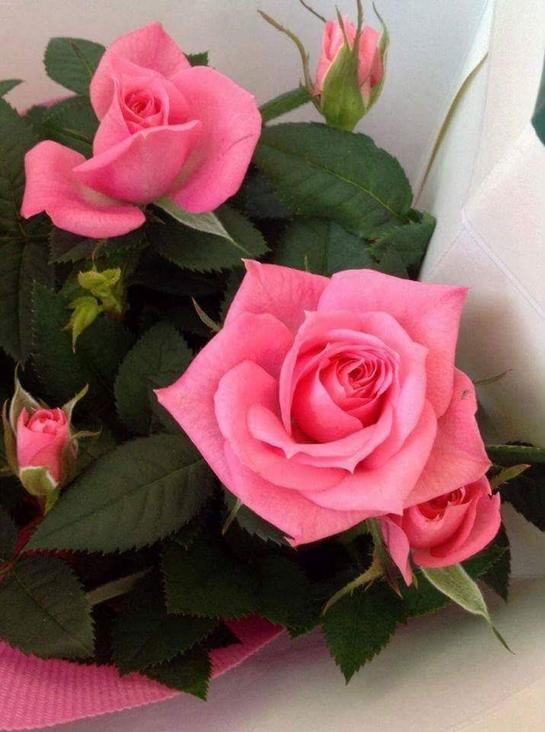 Pin By Don Bean On Roses