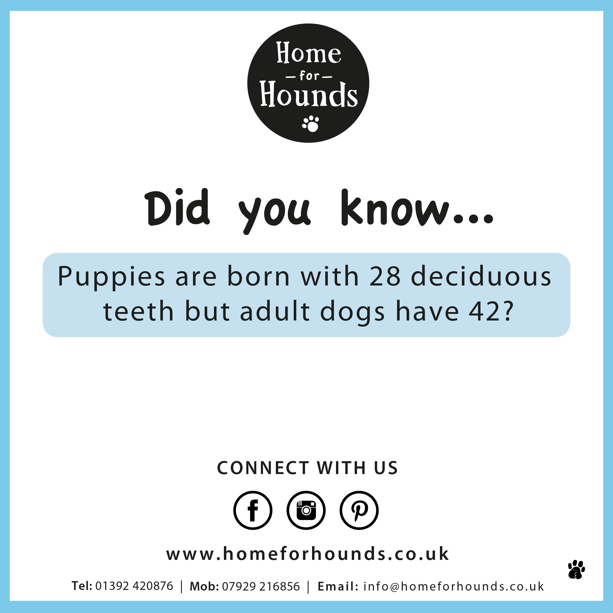 Did you know, puppies are born with 28 deciduous teeth but