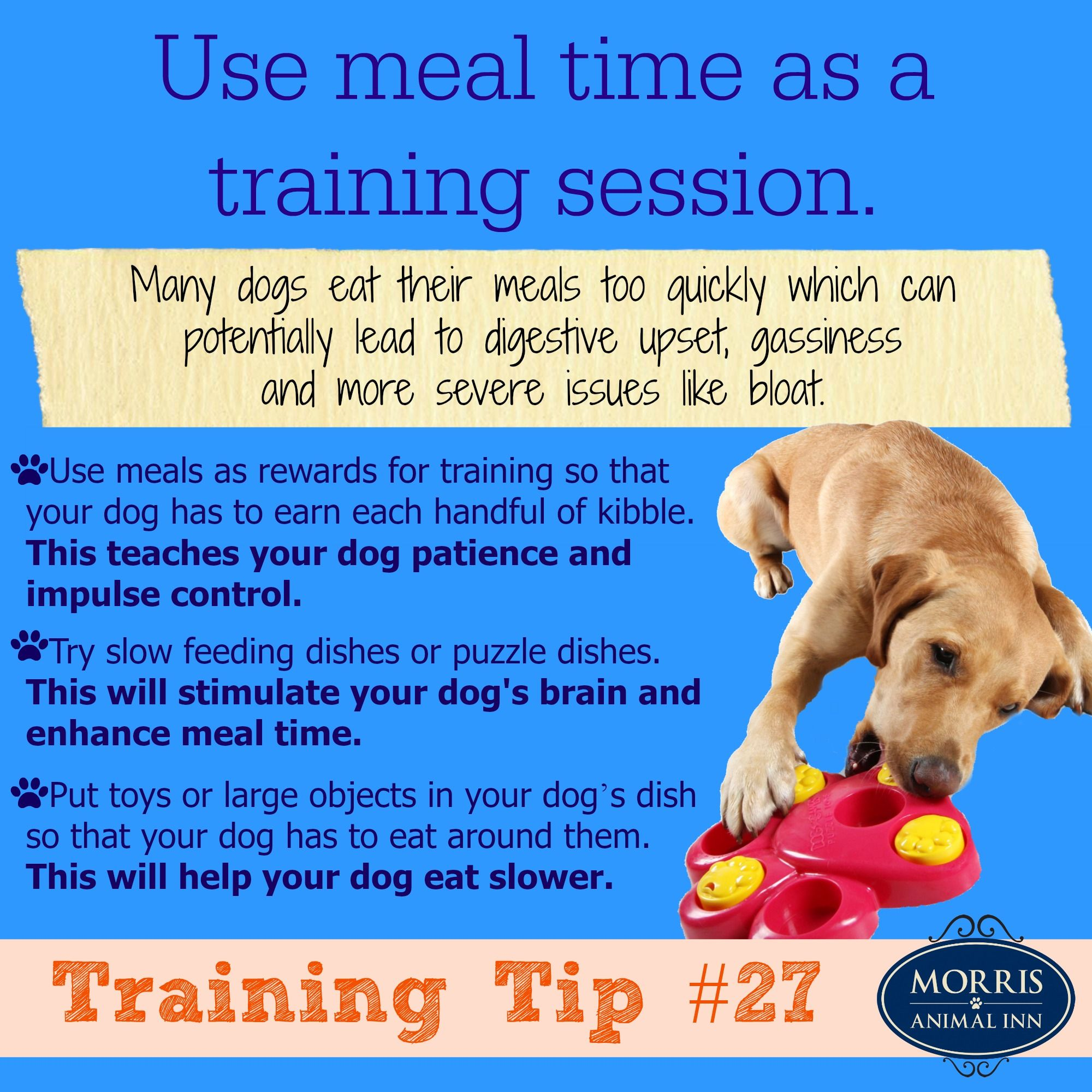 Does Your Dog Eat Too Fast Use Meal Time As A Training Session To