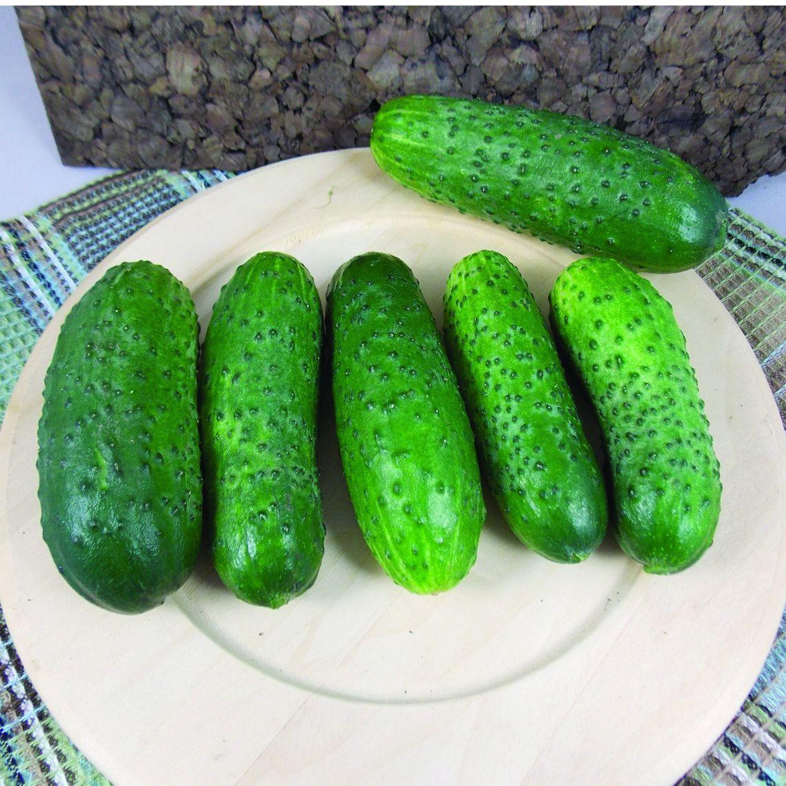 BITTER GOURD SEEDS F1 HYBRID non-GMO Vegetable Seeds for Home Gardeners