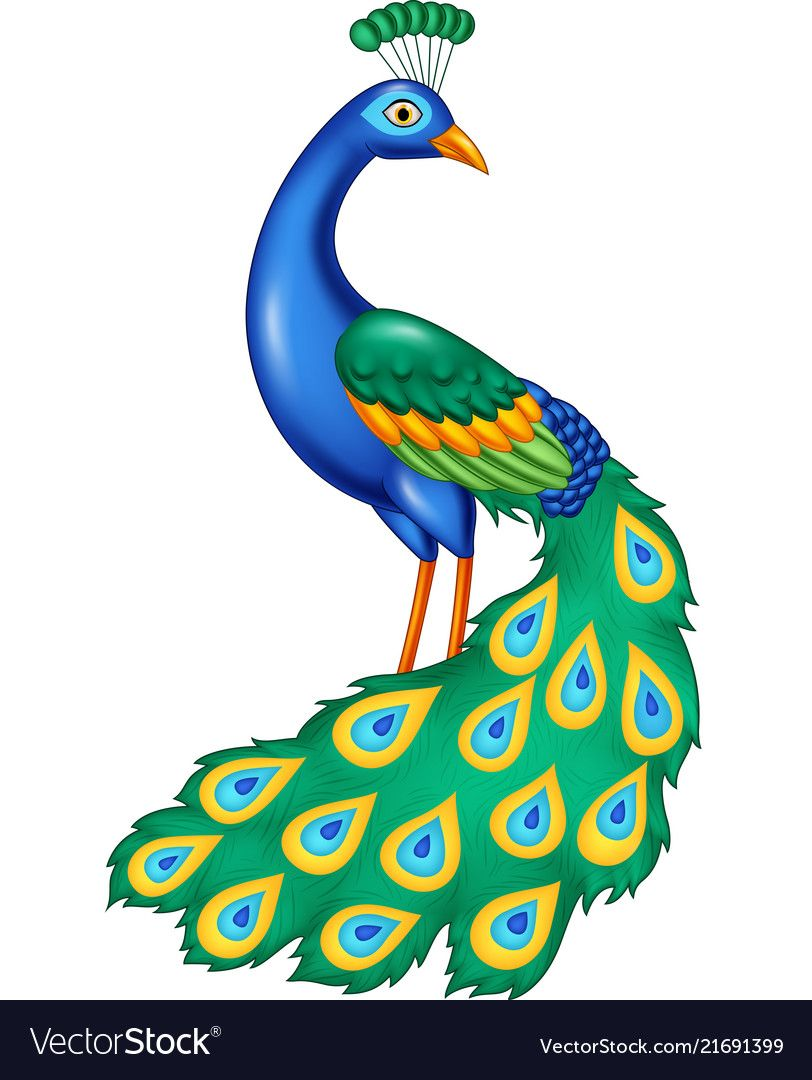 cartoon beautiful peacock vector image on vectorstock art drawings for kids peacock drawing peacock drawing images cartoon beautiful peacock vector image