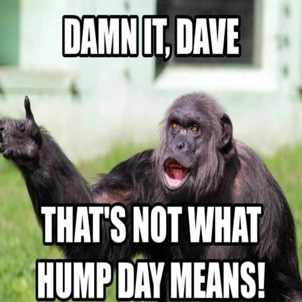 It S That Time Of The Week Half Way There Funny Hump Day Memes Monkey Memes Monkeys Funny