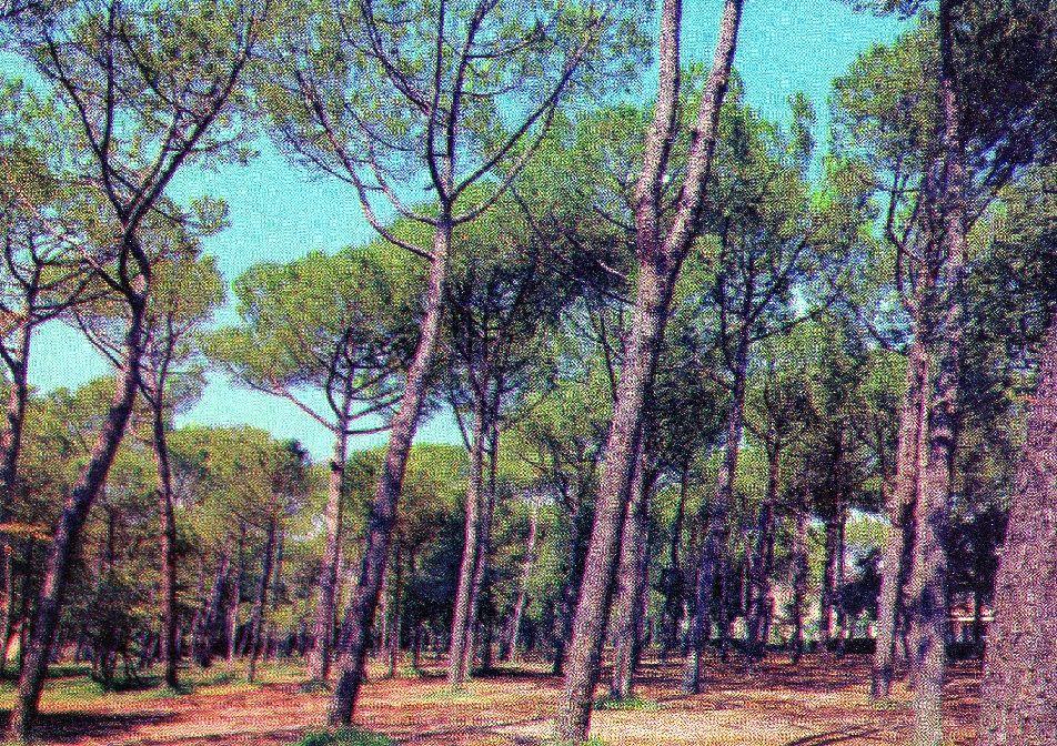 Forte Dei Marmi Versilia Pineta Marmi Cartoline Italia