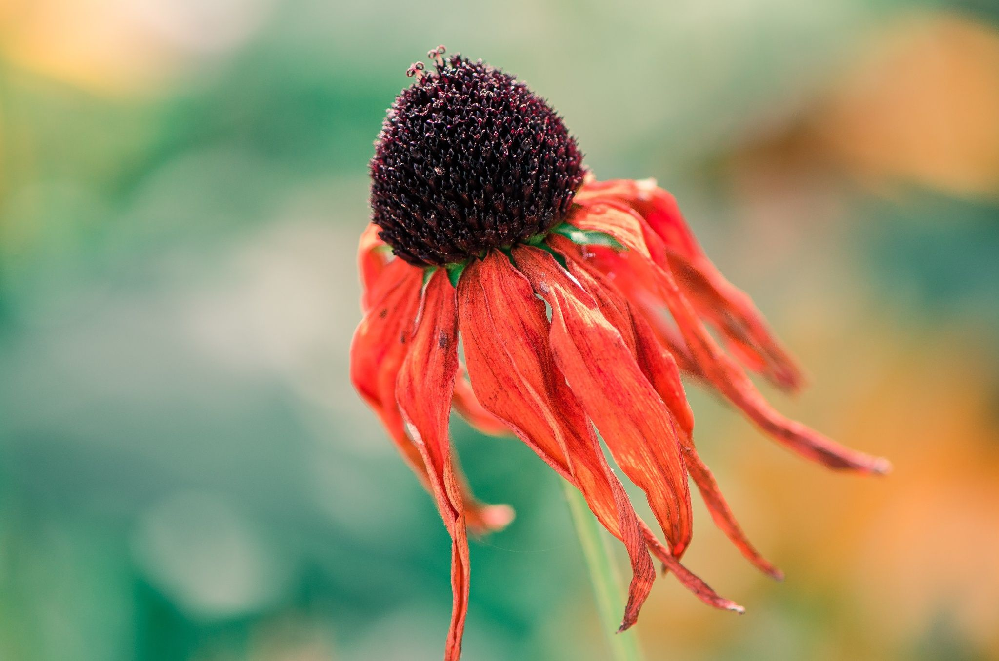 Photograph Standing still (of dying beauty) by B N on 500px